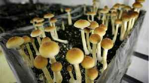 Oregon Could Become The First State To Legalize Magic Mushrooms [Video]