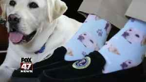 'Mission complete': Sully the service dog accompanies Bush one last time [Video]