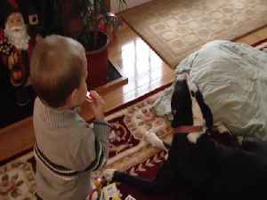 Toddler and Dog Just want to Make Music! [Video]