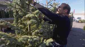 Why Christmas Tree Farms Are Blaming Shortage on 2008 Recession [Video]