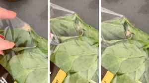 Live moth found flying around in sealed 'washed and ready to eat' spinach bag [Video]