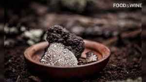 Black Truffle Production in Europe Could End Completely Due to Climate Change [Video]