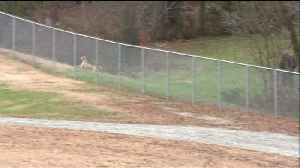 Dog Runs Loose at North Carolina School Day After Separate Dog Attack Nearby [Video]