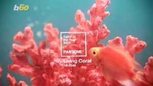 Pantone Names 'Vibrant But Mellow' Living Coral Its 2019 Color of the Year [Video]