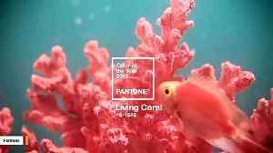 Pantone Declares 'Living Coral' The Color Of The Year [Video]
