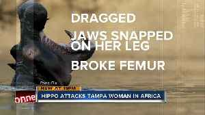 Florida woman attacked by hippo after canoe capsizes on Zimbabwe wildlife tour [Video]
