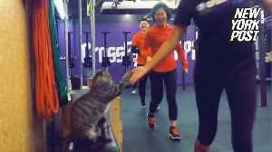 Cat high-fives people working out at the gym [Video]