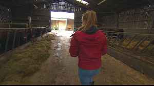 Fears 'no-deal' Brexit could hurt UK farming industry [Video]