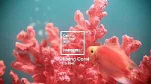 News video: Pantone Announces Living Coral Is the 2019 Color of the Year Because We Need 'Optimism and Joyful Pursuits'