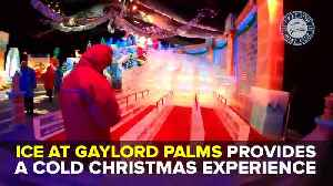 News video: ICE! at Gaylord Palms is a winter wonderland | Taste and See Tampa Bay