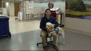 Mayo Clinic Health System welcomes first facility dog [Video]