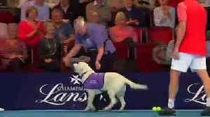 Match-pointer! Ball-dogs let loose on tennis court [Video]
