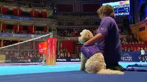 'Ball dogs' fetch in Champions Tennis competition [Video]