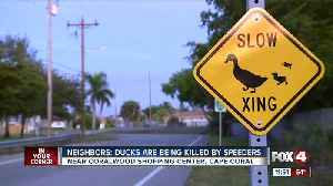 Ducks being killed by speeders in Cape Coral [Video]