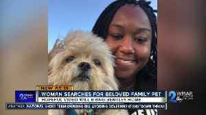 Woman searches for beloved pet [Video]