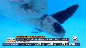 Plastic problem affects sea turtles [Video]