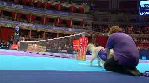Canines help fetch balls at tennis tournament in London [Video]