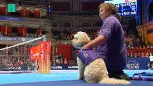'Ball Dogs' Lend Helping Hound At Champions Tennis Tournament [Video]