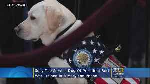 President H.W. Bush's Service Dog Sully Trained At Maryland Prison [Video]