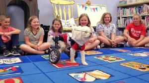 Blind Dog in Wheelchair Teaches Kids About Anti-Bullying [Video]