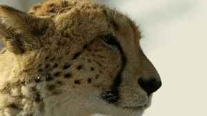 Get breathtakingly close to life in the wild [Video]
