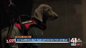 KC Mavericks fostering service dog for veterans [Video]