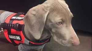 KC Mavericks fostering service dog for veteran [Video]