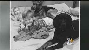 Attleboro Family Searches For Answers After Dog Is Found Shot In The Woods [Video]