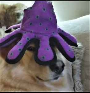 Family dog is seriously unimpressed with new head gear [Video]