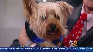 Furry Friend Finder: Murphy And Archie [Video]