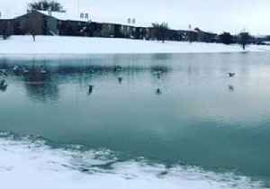Waterfowl Fly Across Lubbock Lake After Heavy Snowfall [Video]