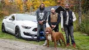 World's Biggest Pitbull Hulk Stars In Rap Video | DOG DYNASTY [Video]