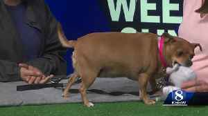 Pet of the Weekend: Delilah [Video]