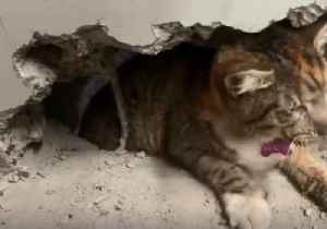 Rescuers Use Drill to Free Cat Trapped Between Two Factory Walls [Video]