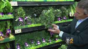 Tip Of The Day: Red Kale [Video]