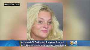 Florida Woman Charged With Abusing Puppies Stuffed Into Backpack [Video]