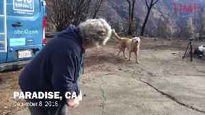 Couple Returns to Home Lost in California's Camp Fire to Find Their Dog Waiting for Them [Video]