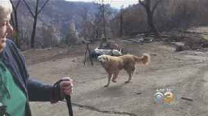 Dog Reportedly Stood Guard At Burning California Home For Weeks Until Owner Returned [Video]