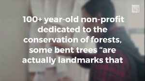 You Know Those Bent Trees You Find in the Woods? Turns Out Indians Used Them to Keep Track of Important Things [Video]
