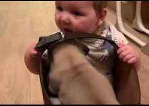 Bags of Fun: Pug and Baby Pal Spend Time Together [Video]