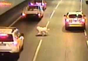 Dog Narrowly Avoids Death After Jumping From Car in Traffic Tunnel [Video]
