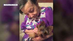 Elderly Woman`s Companion Dog and Best Friend Was Stolen Days Before Her Death, Family Says [Video]