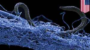 Scientists find subterranean ecosystem of deep life microbes [Video]