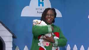 Rescue Dog Rescue With Whoopi Goldberg [Video]