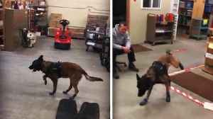 South Dakota Police K-9 Can't Stand His New Boots [Video]