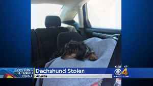 Police: Thieves Steal Car With Puppy Inside [Video]