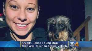 GOOD NEWS: Police Find Puppy That Was Inside Stolen Car [Video]