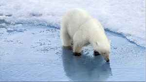 7 Reasons Why Arctic Sea Ice Matters [Video]