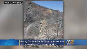 Fire-Scorched Santa Monica Mountains Won't Be Ready For Visitors Any Time Soon [Video]