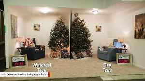 Video Shows How Quickly A Dry Christmas Tree Fire Can Spread [Video]